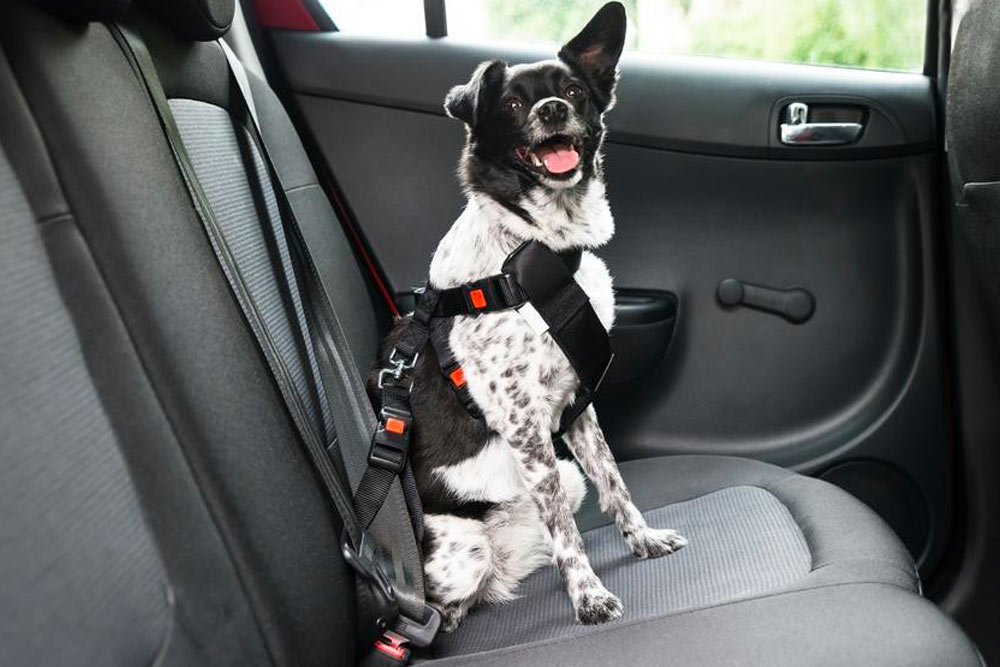 Trasporto animali in sicurezza